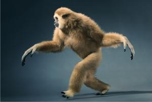 cut gibbon